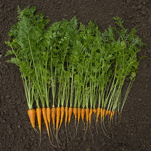 carrot_woodleywonderworks